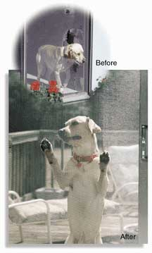 Topla -Pet_Screen_Dog pic